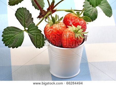 strawberries on a chequered patterned table-cover