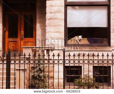 Puppy in bungalow window