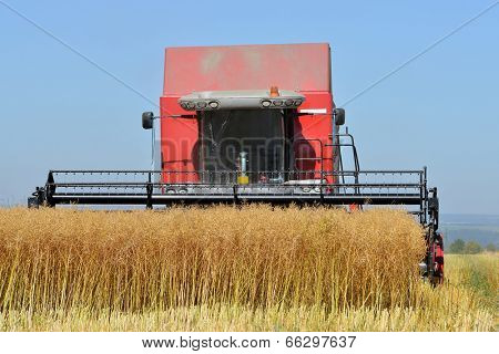 CHLUMCANY, CZECH REPUBLIC - AUG 2, 2013 Combine harvester on a rapeseed field.