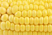 stock photo of corn-silk  - Close up of  yellow corn cob - JPG