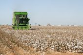 picture of pima  - a cotton picker harvests cotton with a cotton gin in the background - JPG
