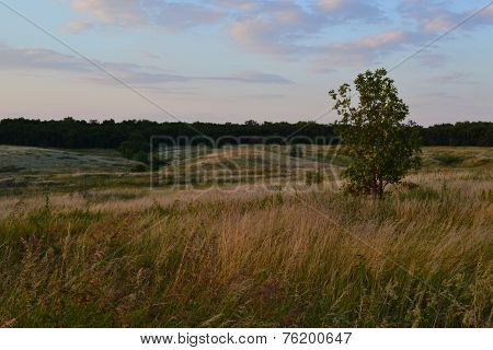 The tree in the steppe