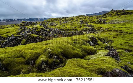 Lava Field With Green Moss In Iceland