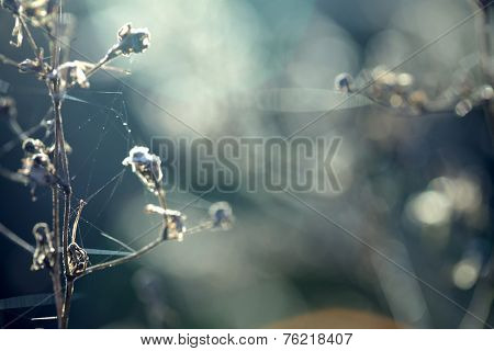 Autumn grass with  ice in the rays of dawn