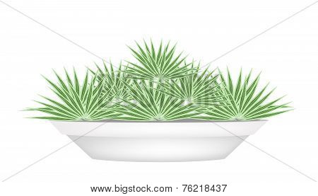 Small Palm Trees in A Flower Pot