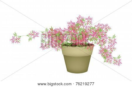 A Pink Flowering Plants in Flower Pot