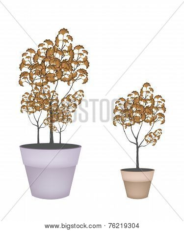 Abstract Isometric of Trees in Flower Pot