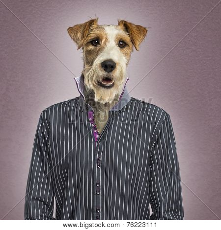 Parson russel terrier dressed