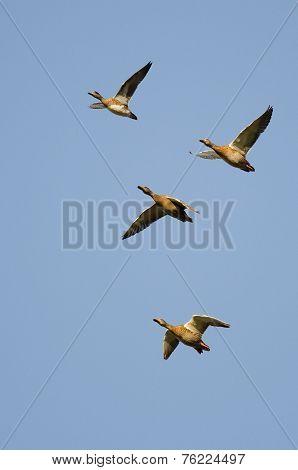 Four Ducks Flying In A Blue Sky