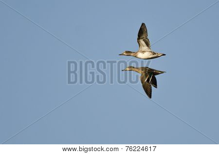 Two Green-winged Teals Flying In A Blue Sky