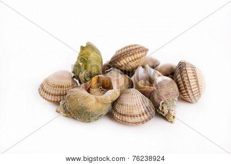 whelk and shellfish