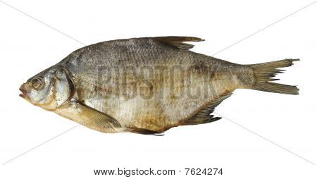 Dry Fish Isolated