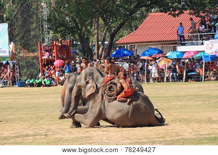 all Mahout and elephant prepare to show in Surin Elephant Round-up 2014