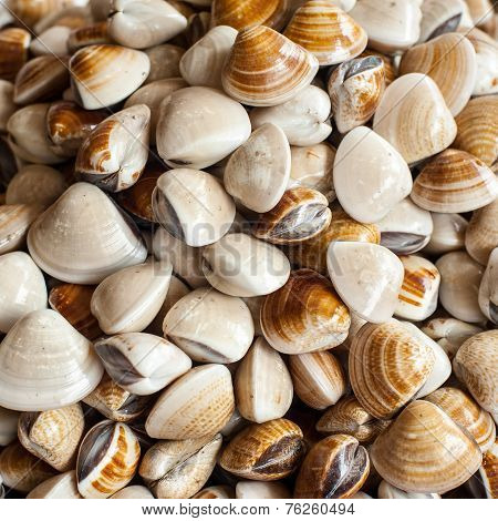 Fresh Cockles ( Clams ) At Seafood Market