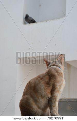 cat looking bird