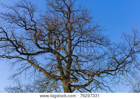 bald tree crown, symbol photo for seasons, change, ecology