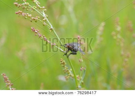 House fly in grass