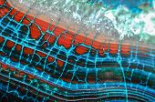 picture of agate  - Blue and Red Dragon Vein Agate Pattern - JPG