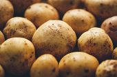 foto of solanum tuberosum  - Fresh potato tubers closeup - JPG
