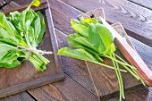 picture of sorrel  - fresh sorrel on the wooden board and on a table - JPG