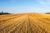 stock photo of haystack  - Haystacks in the field at sunny day - JPG