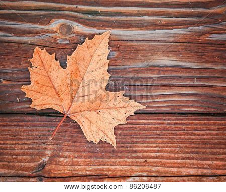 a leaf on a wooden background