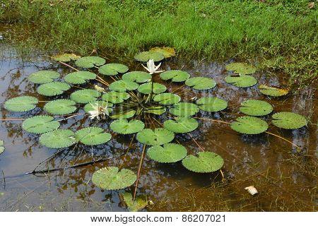 Waterplant