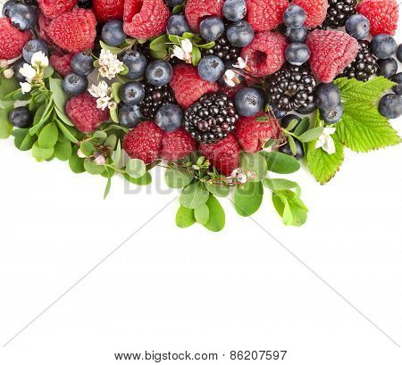 tasty forest berries with flowering plant isolated on a white background