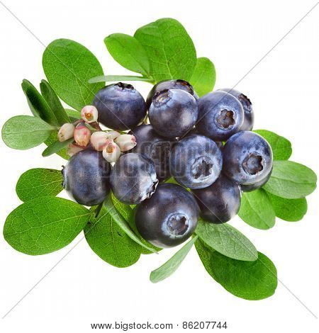 Fresh  blueberries with flowers isolated on a white background