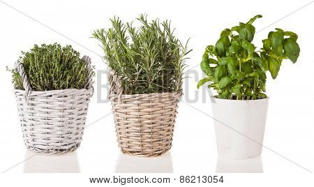 Basil, rosemary and marjoram in pots, isolated on white background