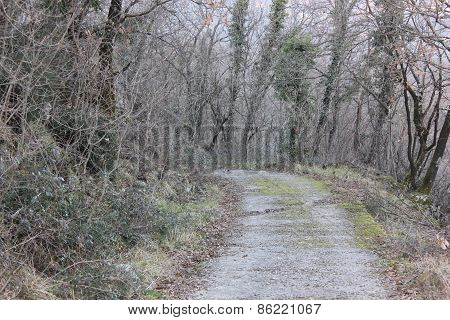 Path through the woods 3