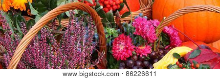 Autumn Flowers And Fruits