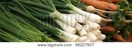 Young Green Onion