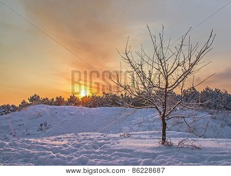 Tree On A Background Of A Winter Sunset In The Forest