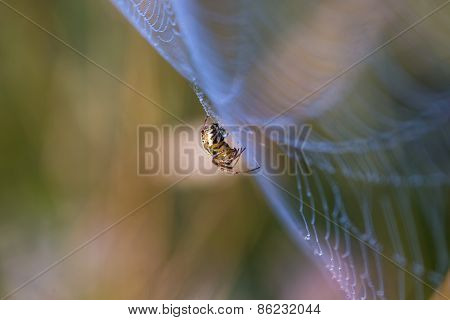 Spider Sitting On Web