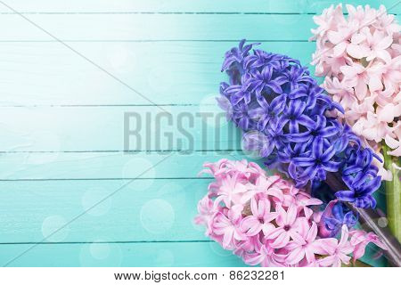 Postcard With Fresh Spring Flowers Hyacinths
