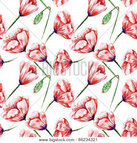 Poppy Pattern on White Background