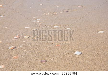 Sand And Shells Background