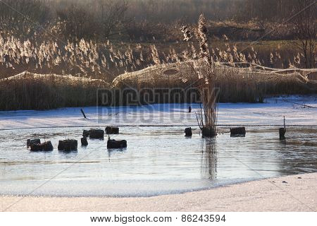 Winter landscape by the lake