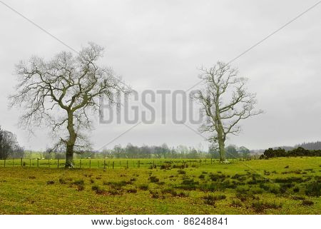 A Field On A Farmland In Scottish Rural Area