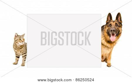 Dog and cat peeking from behind poster