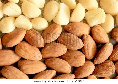 Macro Almonds and Macadamia Nuts 5