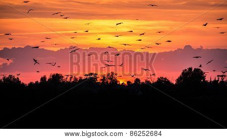 Flying Birds Against The Evening Sky