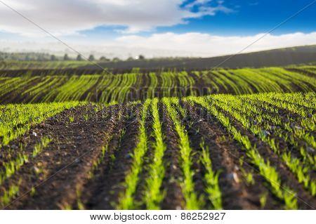The Field Scenery