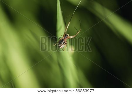 Insect Spider Closeup