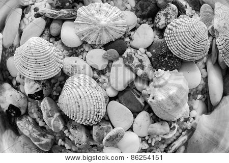 Exotic Seabed Of Monochrome Tone