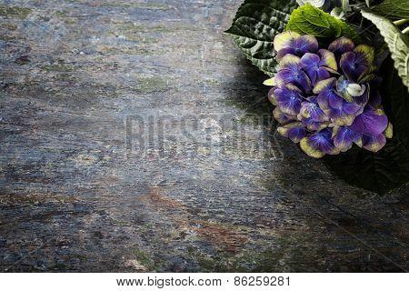 Hydrangea flower  on wooden background
