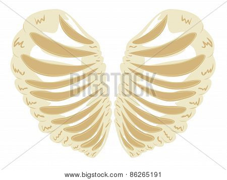 Heart Shaped Rib Cage
