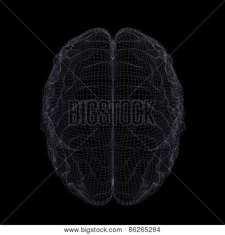 Wire-frame of human brain