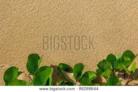 Sand and plant